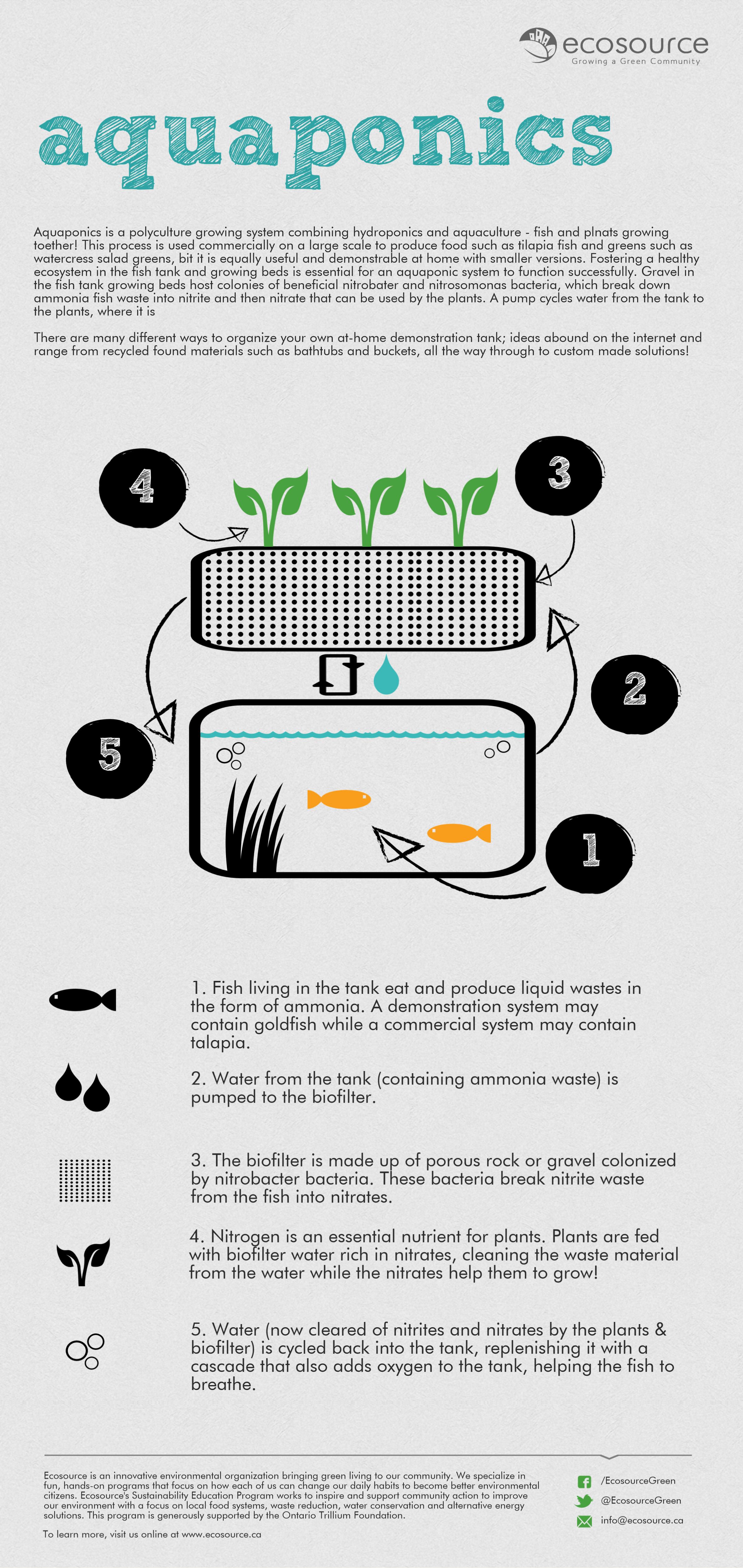 Aquaponics Infogr