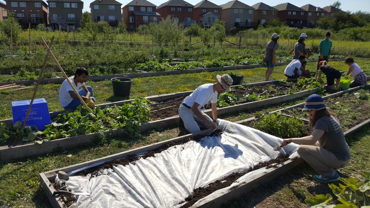 Iceland-Teaching-Garden