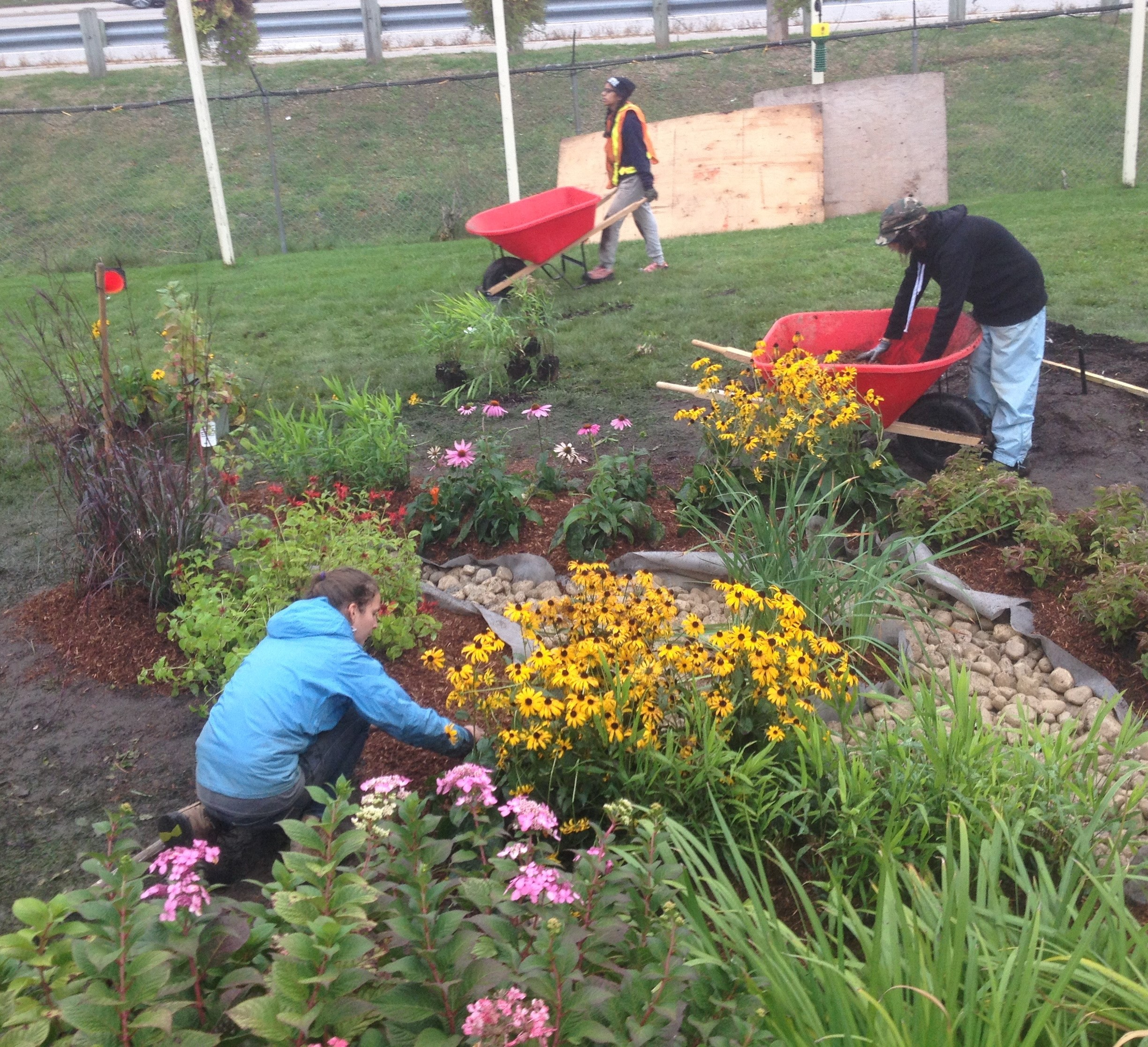 Volunteers planting the rain garden and laying mulch.